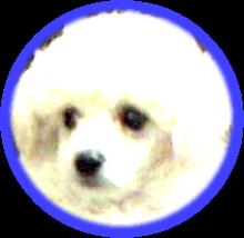 CCI20150317_切り取り_205-199_コ01_B