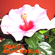 IMG_2309_切り抜きB01