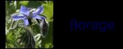 borage_BA001a